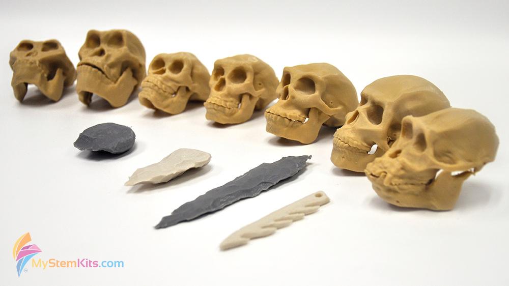 calaveras impresas en 3D